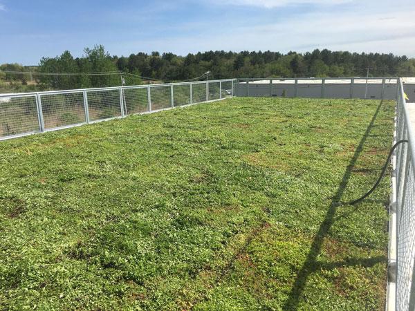 bradford bigelow green roof